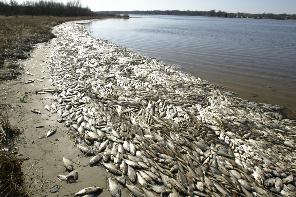 the solutions to the problem of fish damage by sea lampery in the great lakes